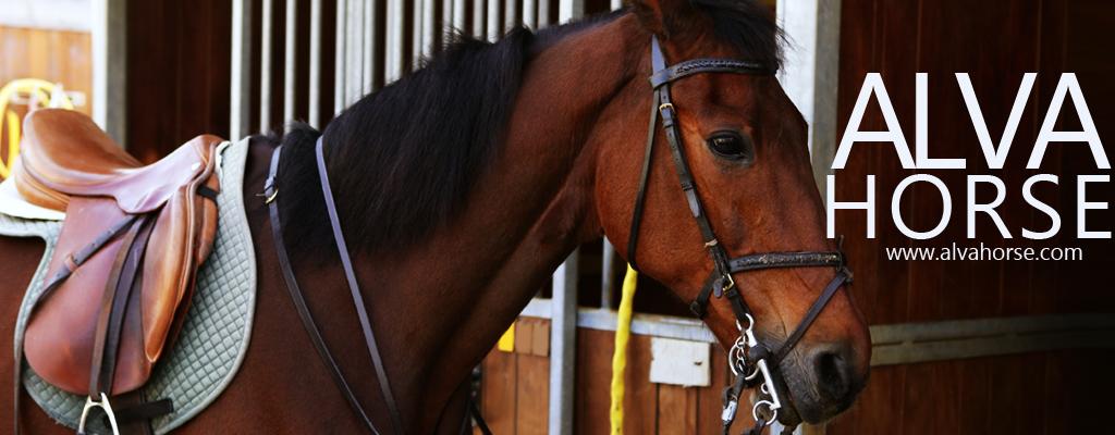Horses Healthcare